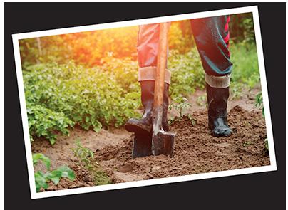 Homepage-digging
